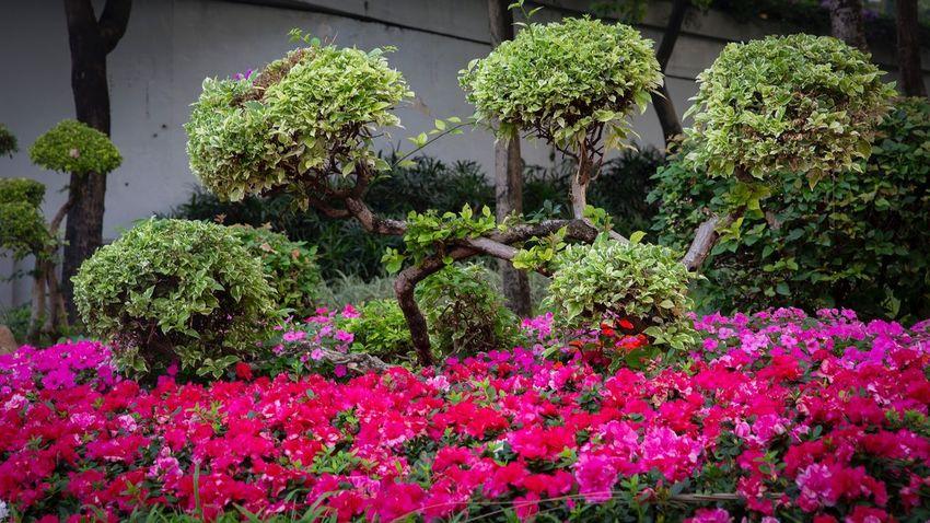 好心情(1) 好心情(1) Plant Growth Flower Flowering Plant Beauty In Nature Freshness Nature No People Park - Man Made Space Botany Front Or Back Yard Garden Tree Outdoors Vulnerability  Pink Color Park Fragility Day Green Color