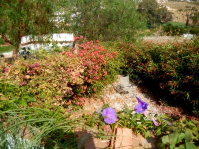 Garden Spain Tapestry Of Colour