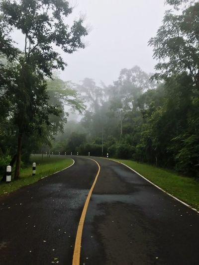 Tree Road The Way Forward Transportation No People Day Nature Outdoors Tranquility Sky Tranquil Scene Beauty In Nature Landscape Scenics Fog Grass