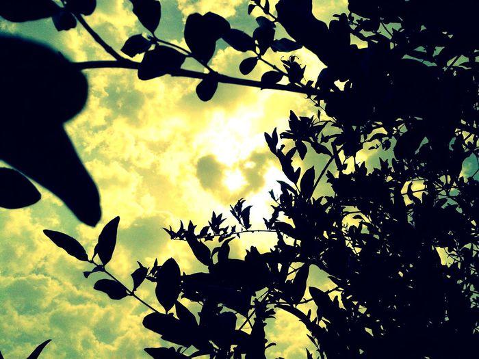 Dark Under Light First Eyeem Photo
