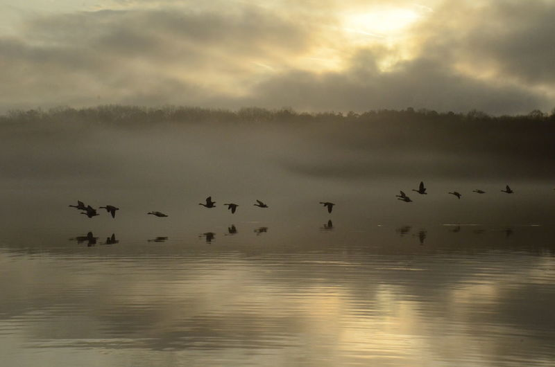 Animal Themes Animal Animal Wildlife Animals In The Wild Vertebrate Group Of Animals Bird Large Group Of Animals Waterfront Sky Water Beauty In Nature Cloud - Sky Reflection Sunset Flying Nature No People Scenics - Nature Flock Of Birds Geese New Years Day 2019