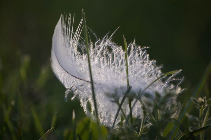 Nature Fragility Close-up Beauty In Nature Grass feather