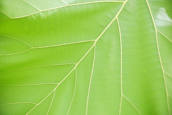 Leaf Green Color Growth Nature No People Close-up Backgrounds Plant Day Beauty In Nature Outdoors Fragility Freshness