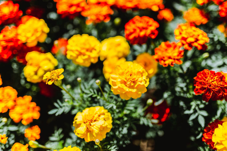 Flower. Flower Flowering Plant Plant Freshness Beauty In Nature Vulnerability  Fragility Yellow Growth Petal Flower Head Inflorescence Close-up No People Nature Day Selective Focus Full Frame High Angle View Orange Color Outdoors Bunch Of Flowers