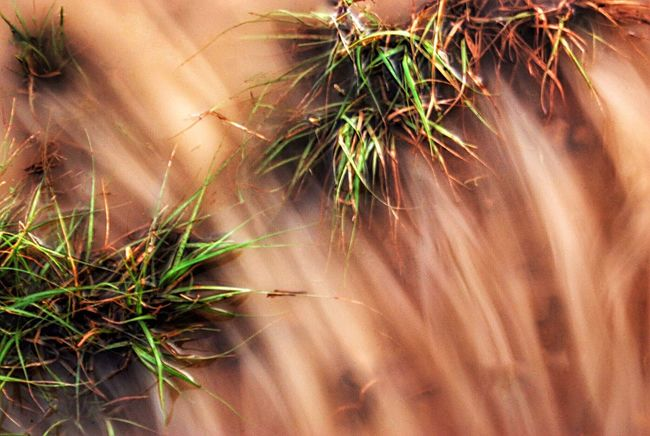 EyeEm Selects Plant Nature Growth Close-up Outdoors Day No People Beauty Flower Beauty In Nature Freshness Flower Head After The Rain Flowing Water Muddy Waters Grass And Water Looking Down Brown Water Streaked Rippled Motion After Rain Rainwater