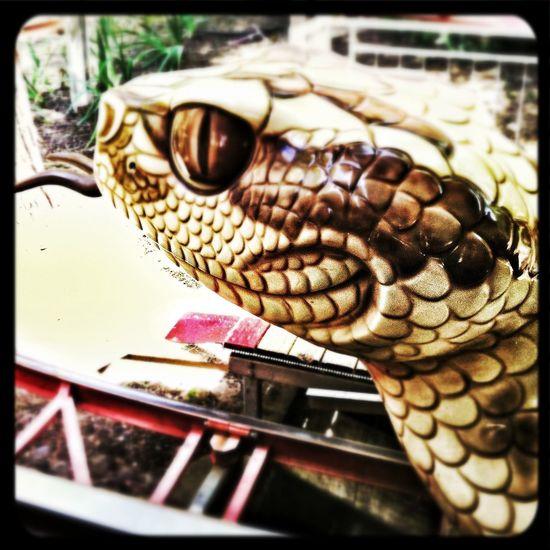 Roller Coaster Snake Taking Photos Hiss