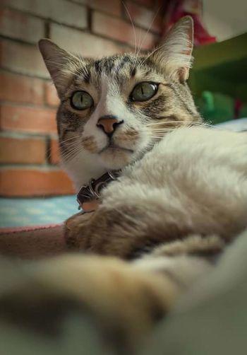 Max ❤ La Vida Misma COMPAÑERO DE VIDA Cat♡ Catlover