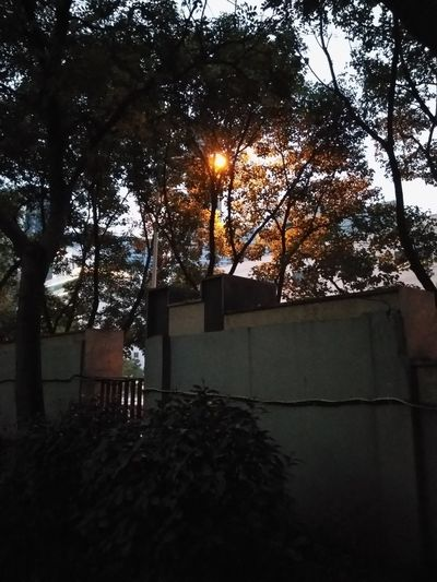 1 Tree Sky