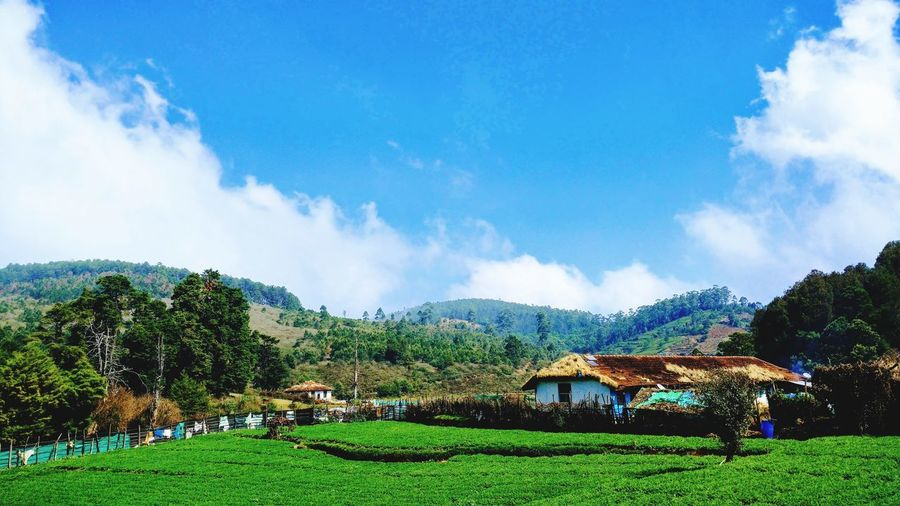 Ooty India Awesome Place OOTY India Green Color Sky And Clouds Grass Agriculture Nature Beauty In Nature Mountain Range Greenery Greenhouse OotY_hiLLz Ooty India <3