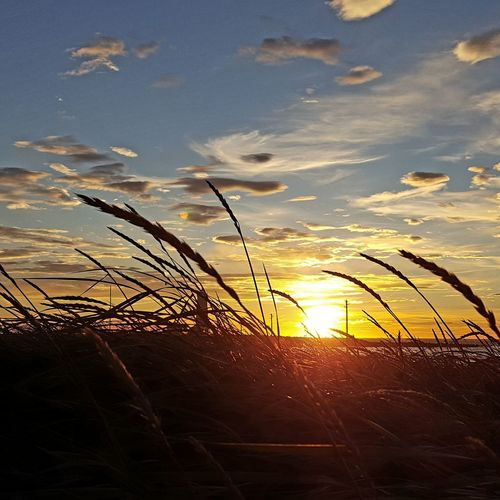 Tour Private Tour Mytours Travel Destinations Traveling Trip Enjoying Life Hoffy Life Streaming Shining Sunbeam Sky Only Romantic Sky Dramatic Sky Moody Sky Reed - Grass Family Tourist Attraction  Famous Place Coast
