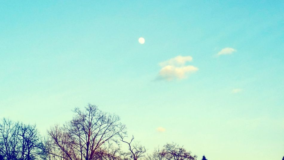 The moon Photography EyeEm Gallery Nature Nature Lover Brunches Clouds And Sky Always Shooting Beautiful Capture The Moment Moon Color Visible Moon EyeEm Best Shots Igersitalia