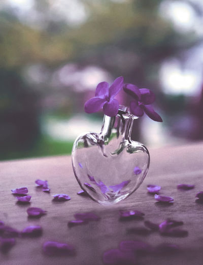 Flowering Plant Flower Plant Purple Close-up Glass - Material Freshness Nature Beauty In Nature Fragility Table Vulnerability  Petal Selective Focus Glass Indoors  Transparent