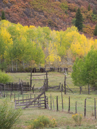 Sep 2018 - Sylvan Lake, Colorado Autumn Barrier Beauty In Nature Boundary Change Corral Day Environment Fence Field Grass Land Landscape Nature No People Outdoors Plant Rural Scene Scenics - Nature Split-rail Fence Tranquil Scene Tranquility Tree
