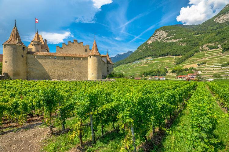 Panoramic view of vineyard on field against sky