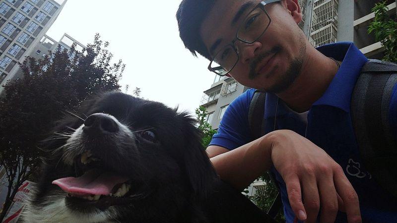One Animal Pets Domestic Mammal Canine Dog Domestic Animals