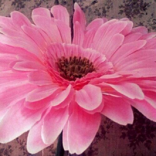 Hundredth Followingmy Follfowback Pink flowerlike