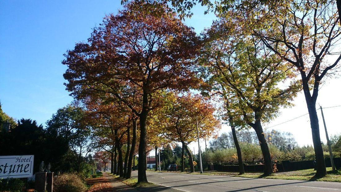 Autumn Beautiful Nature Beautiful Colours.... EyeEm Nature Lover