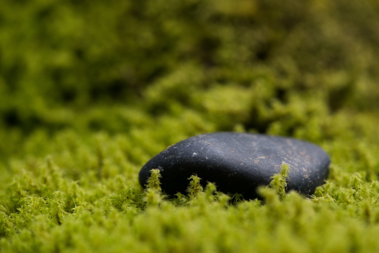 green color, plant, nature, selective focus, growth, no people, land, close-up, grass, field, day, outdoors, moss, beauty in nature, animal wildlife, animal, one animal, black color, food, animal themes