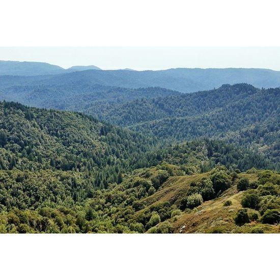 Sea of trees. VSCO Vscocam Castlerock Losgatos santacruz california hiking