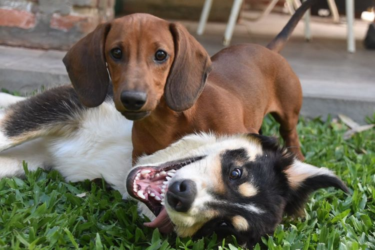 Close-up portrait of relaxed dogs