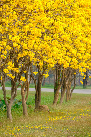 Yellow Plant Tree Nature Beauty In Nature Autumn Flower Land Landscape Scenics - Nature Flowering Plant Grass Outdoors Growth No People Change Day Field Environment Rural Scene