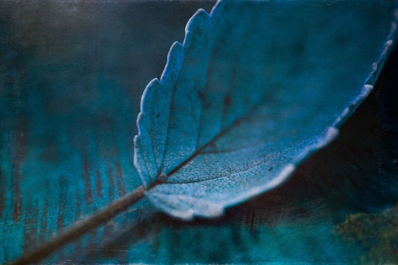 Lieblingsteil Leaf Nature Close-up No People Outdoors Beauty In Nature Autumn Growth Day Tree Minimalism Abstract Bokeh Light And Shadow Still Life Nature Colorful Blue Autumn Beauty In Nature Fall Mextures Mexturesapp Textures