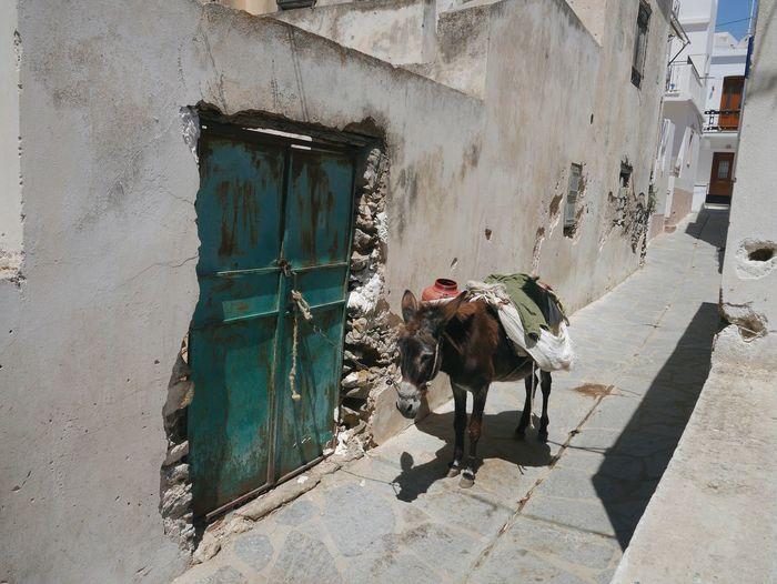 Summer Holidays Greece Streetphotography Donkey Service Animals The Street Photographer - 2016 EyeEm Awards