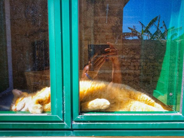 Sunbathing Cat Sampieri Ragusa Sicily Italy Travel Photography Travel Voyage Traveling Mobile Photography Fine Art Architecture Windows Nature Red Cats Reflections And Shadows Mobile Editing