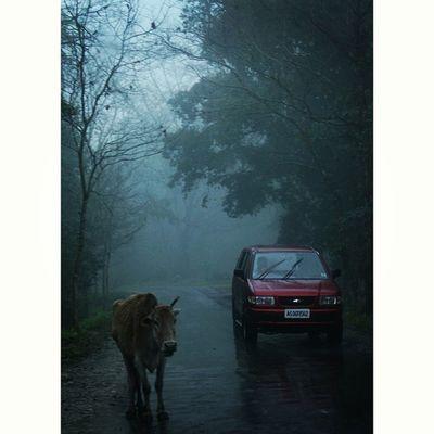 The irrational rains ♥ Nature_perfection Photography Canon DSLR Mypixeldiary Thememorylane Moments Love Life Igersoftheday Picoftheday Bindebros Rain Monsoon Drive