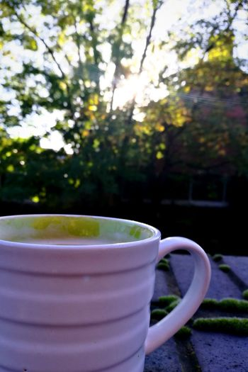 Drink No People Food And Drink Tea - Hot Drink Day Outdoors Tree Close-up Nature Freshness