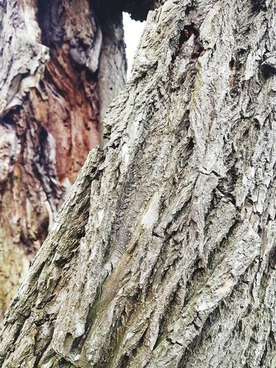 close up that highlight two trees #closeupshot #natureart #Nature  Rock Face Textured  Rock - Object Pattern Rough Close-up First Eyeem Photo