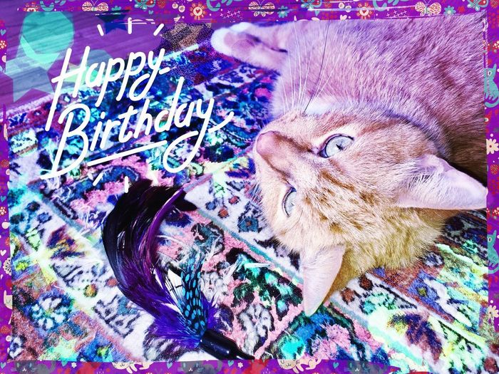 3XPSUnity Purple Feathers Cat Power Cat Toy Cat Pose Card Making Card Design Card Of Creation Creativity Creative Art, Drawing, Creativity Cat Lovers 🐱💞 My Friend ❤ Cat Dreams Cat Collection Cat Of EyeEm Cat Love ♥