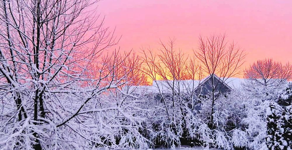 Showcase February Sunset. Untouched Snow Covered Trees Freshly Covered Trees With Pire White Snor. Open Edit February Photo Challenge