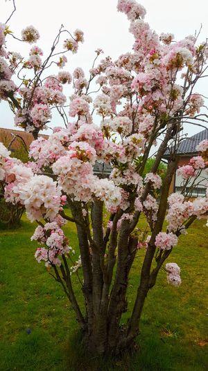 spring Flower Tree Springtime Branch Blossom Close-up Plant Life Apple Blossom Blooming In Bloom Botany Fruit Tree Flower Head Pollen Petal