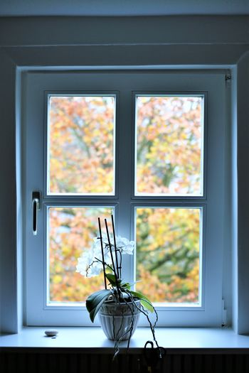 An Image of a window Architecture Autumn Close-up Day Design Flower House Indoors  Interior Design Nature No People Tree Vintage Window