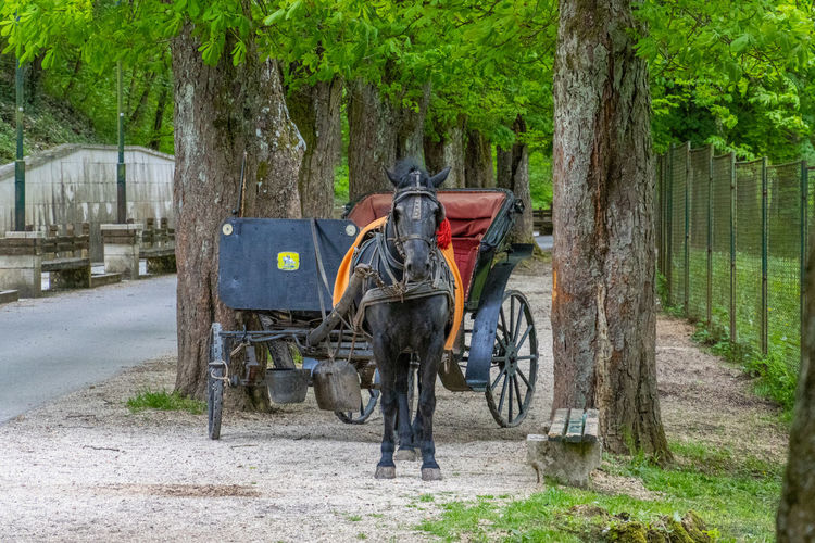 View of horse cart on road amidst trees