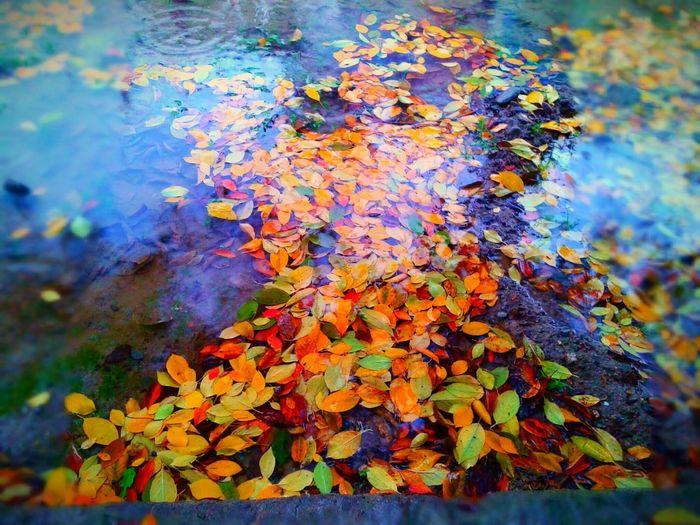 I Love This Wonderfull Color's😍😍😍