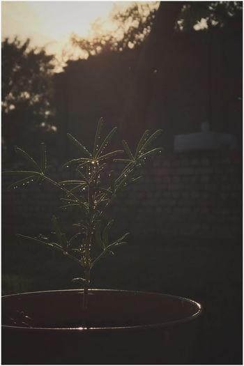 I captured the last sunbeams of the day as they hit my plants. Kris Demey Photography Plant Nature No People Focus On Foreground Close-up Water Tree Drop Outdoors Growth Wet Beauty In Nature Plant Part Fragility Night Tranquility Silhouette Sky Dark