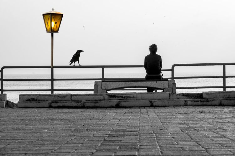 Rear view of woman looking at sea while sitting on promenade