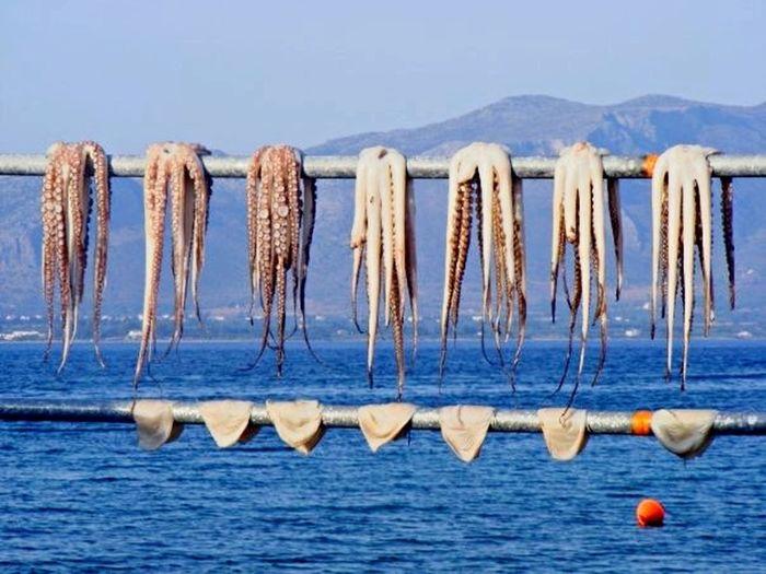 Greek octopus