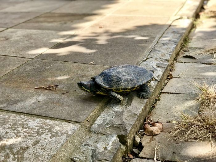 Turtle on the