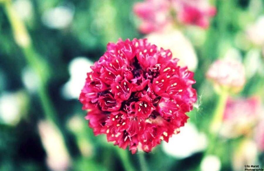 Floral Fleurs Rouge
