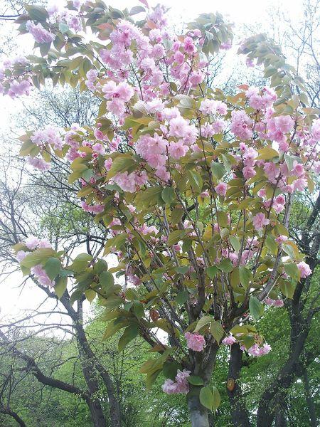 Flower Büyükçamlıca Koru Nature Tree Üsküdar. İstanbul TÜRKİYE..