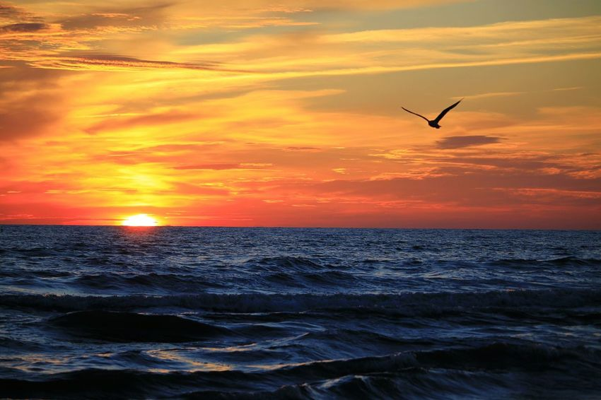sunset Bird Water Flying Sea Sunset Beach Beauty Silhouette Spread Wings Full Length Romantic Sky Sea Bird Wave Seascape Horizon Over Water Coast Seagull Dramatic Sky Moody Sky Atmospheric Mood