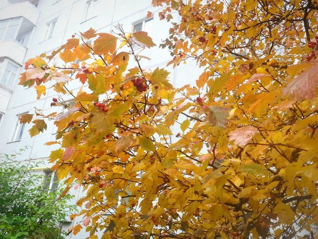 Yellow leaves, yellow mood Taking Photos Enjoying Life Autumn Leaves Yellow Leaves September City Trees