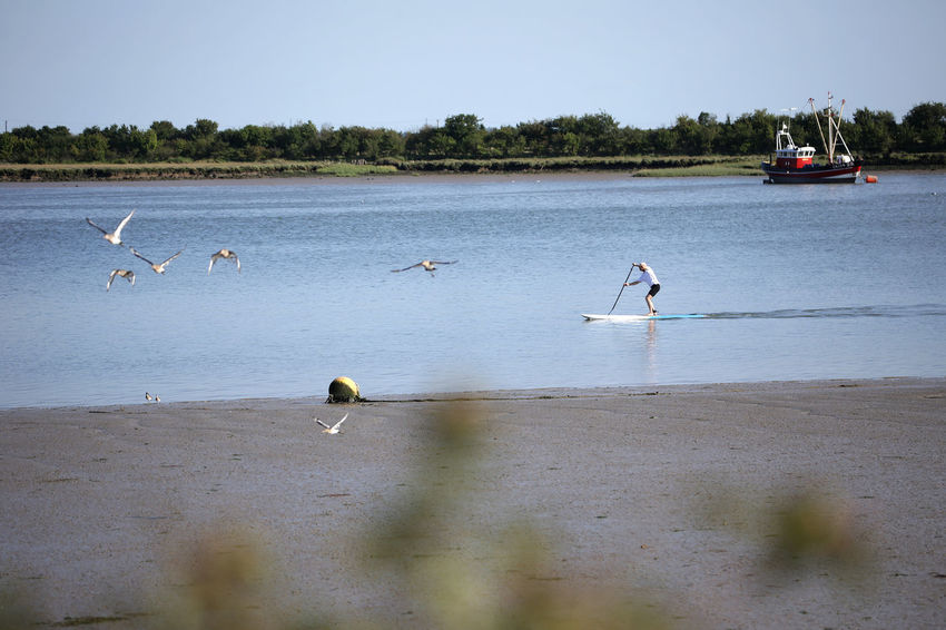 Beach Boat Canoe Estuary Estuary View Exploring Great Outdoors Man On Water Outdoors Paddle Paddleboarding Paddlesurf Paddlesurfing Relaxing Sea Sea Kayak Sea Kayaking Seagulls Seaside Seaside Fun Stand Up Paddle Surfing Surfing Waterscape Waterside Watersports
