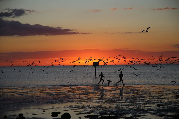 Silhouette birds and people on shore at beach against sky during sunset