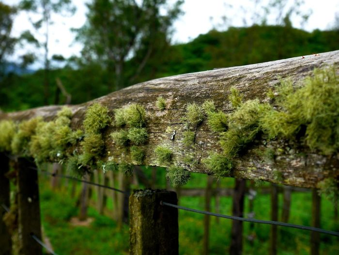 Plant Tree Focus On Foreground Barrier Fence Day Boundary Nature No People Close-up Growth Land Selective Focus Outdoors Wood - Material Moss Metal Green Color Security Protection