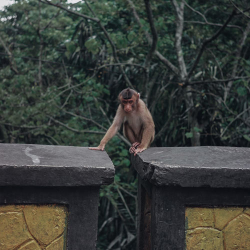 A monkey who is bowing alone and i capture the moment