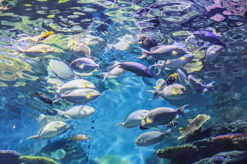 Low Angle View Of Fishes Swimming In Tank